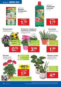 Ofertas de Flores  en el folleto de Lidl en Madrid