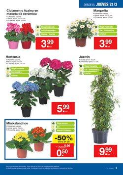 Ofertas de Plantas con flor  en el folleto de Lidl en Madrid