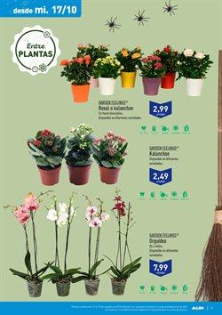 Ofertas de Plantas  en el folleto de Aldi en Madrid