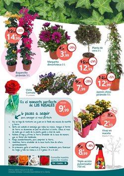 Ofertas de Plantas con flor  en el folleto de Verdecora en Madrid