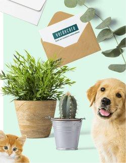 Ofertas de Verdecora en el catálogo de Verdecora ( Caducado)