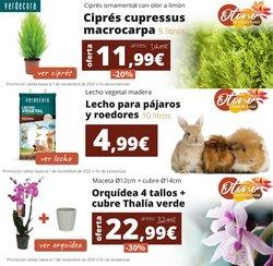 Ofertas de Verdecora en el catálogo de Verdecora ( 11 días más)