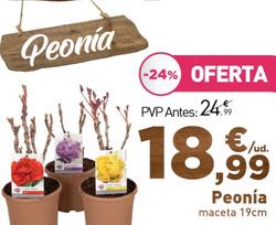 Ofertas de Flores  en el folleto de Verdecora en Madrid