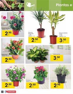 Ofertas de Flores  en el folleto de Eroski en A Coruña