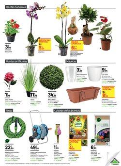 Comprar Plantas Con Flor En Barcelona Ofertas Y Descuentos