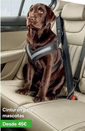 Oferta de Cinturón de seguridad para perros por