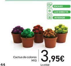 Oferta de Cactus de colores M13 por 3.95€