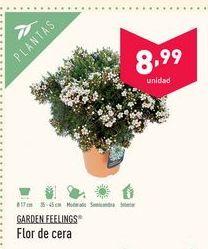 Oferta de Flores Garden Feelings por 8.99€