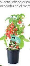 Oferta de Tomate cherry por 5.99€