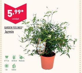 Oferta de Jazmín Garden Feelings por 5,99€