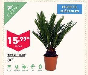 Oferta de Cyca Garden Feelings por 15,99€