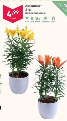 Oferta de Lirios Garden Feelings por 4,99€