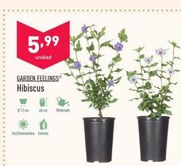 Oferta de Hibiscus Garden Feelings por 5,99€