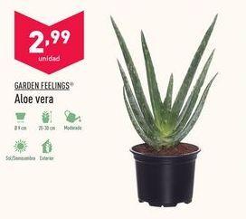 Oferta de Aloe vera Garden Feelings por 2,99€