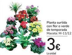 Oferta de Planta surtida con flor o verde de temporada  por 3€