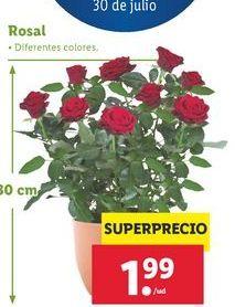 Oferta de Rosales por 1,99€
