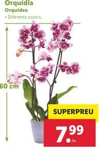 Oferta de Orquídeas por 7,99€