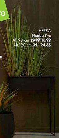 Oferta de Plantas por 16,99€