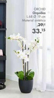 Oferta de Orquídeas por 33,15€