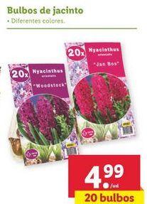 Oferta de Bulbos de jacinto por 4,99€