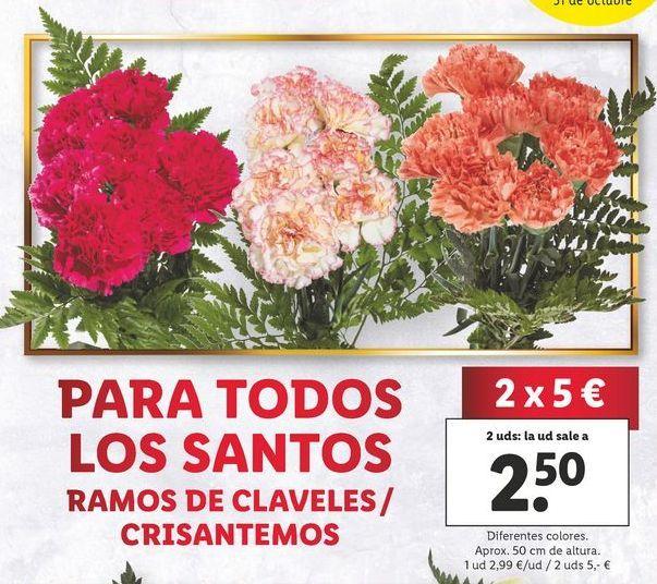 Oferta de Crisantemos por 2,99€