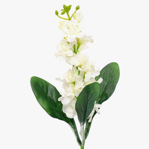 Oferta de Delphinium Blanco 51 cm por 2,95€