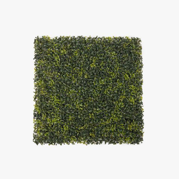 Oferta de Jardín vertical Bahai 50x50 cm por 9,99€