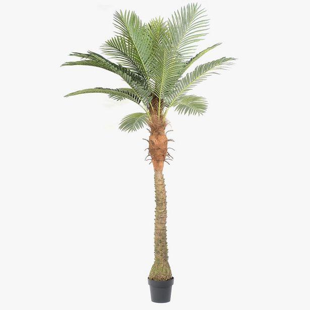 Oferta de Palma Areca 180 cm por 103,2€