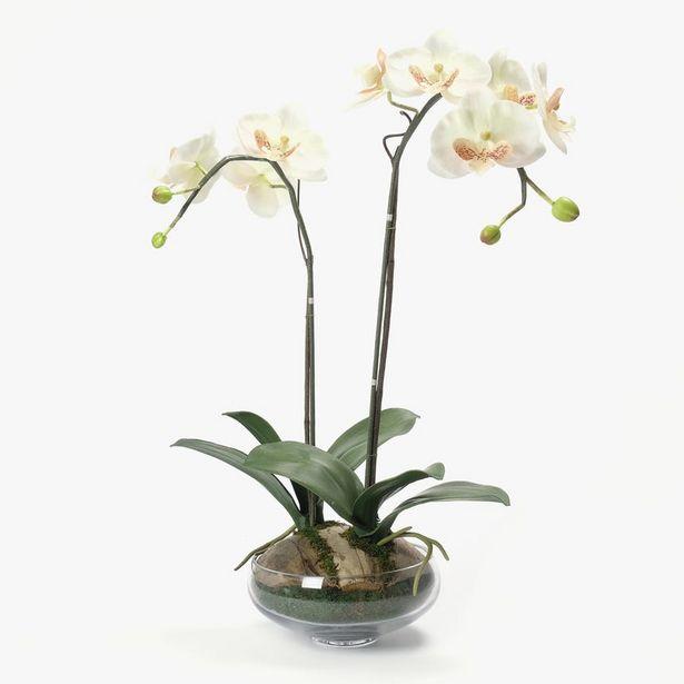 Oferta de Orquidea Blanco 62x37 cm por 44,99€