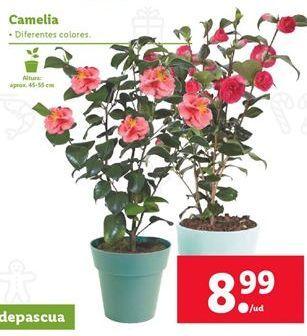 Oferta de Plantas por 8,99€