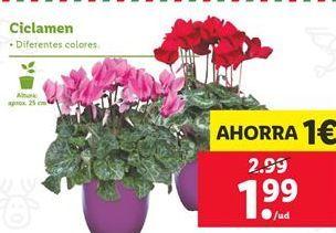 Oferta de Ciclamen por 1,99€