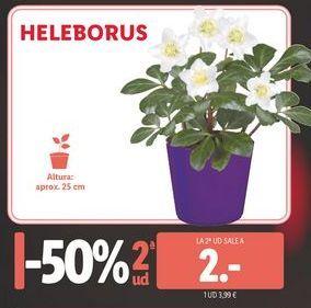 Oferta de Plantas con flor por 3,99€