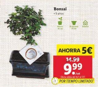 Oferta de Bonsai por 9,99€