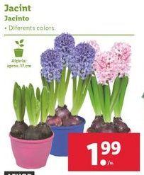 Oferta de Plantas con flor por 1,99€