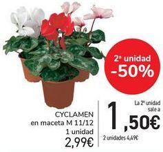 Oferta de CYCLAMEN En maceta  por 2,99€