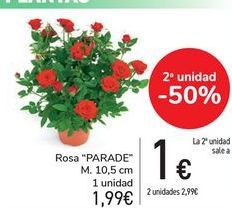 Oferta de Rosa PARADE  por 1,99€