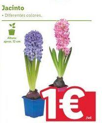Oferta de Plantas por 1€