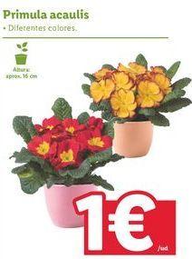 Oferta de Flores por 1€