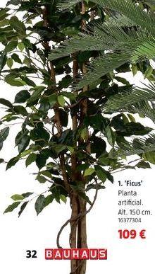 Oferta de Ficus ginseng por 109€