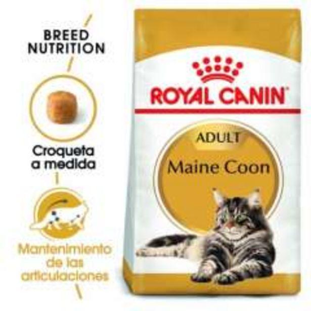 Oferta de Royal Canin Maine Coon pienso para gato adulto por 34,79€
