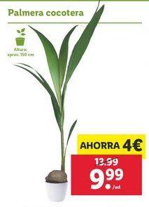Oferta de Plantas por 9,99€