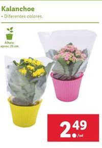 Oferta de Plantas con flor por 2,49€