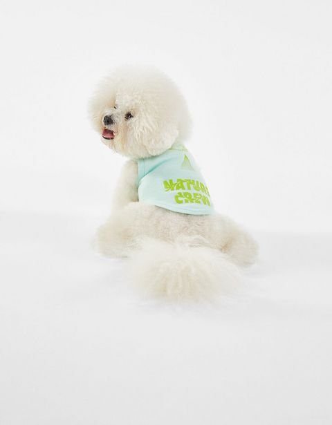 Oferta de Camiseta perro por 1,99€