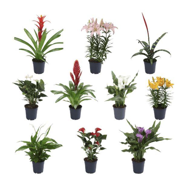 Oferta de Planta exótica por 3,99€