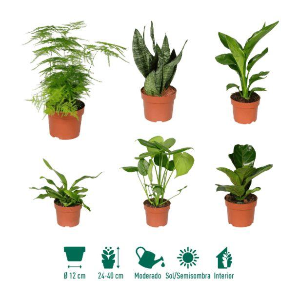 Oferta de Plantas verdes por 3,99€