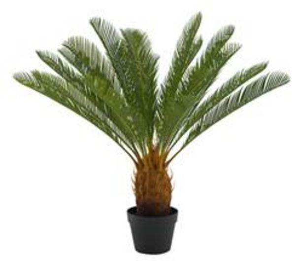 Oferta de CYCAS Palma verde A 80 cm; Ø 78 cm por 41,65€