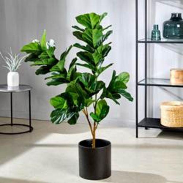 Oferta de FIDDLE Planta de tabaco verde A 110 cm; Ø 15 cm por 41,65€