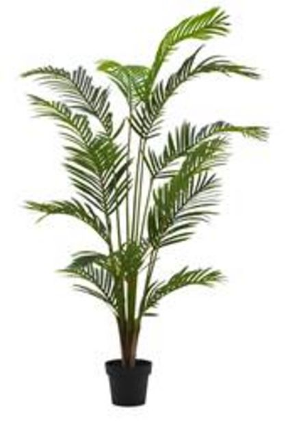 Oferta de KWAI Palma verde A 180 cm; Ø 14,5 cm por 58,65€
