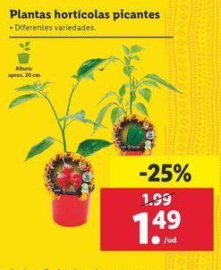 Oferta de Plantas horticolas picante por 1,49€