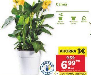 Oferta de CANNA por 6,99€